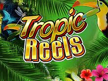 Автомат на деньги Тропические Барабаны